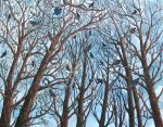 Crows resting in the trees.