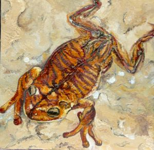 Western toad, Canada.