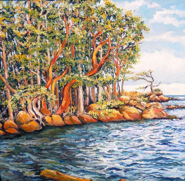 Arbutus trees - West Coast
