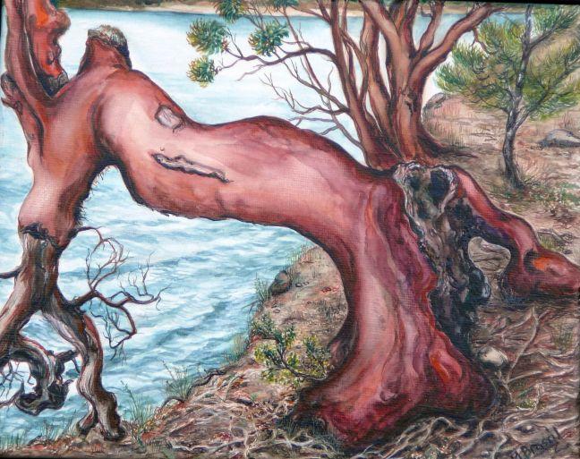 Arbutus tree