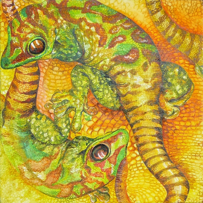 Geckos in yellow and orange